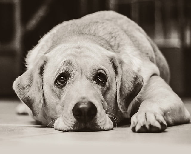 Swanage Jazz Festival 2019 | Dog Policy